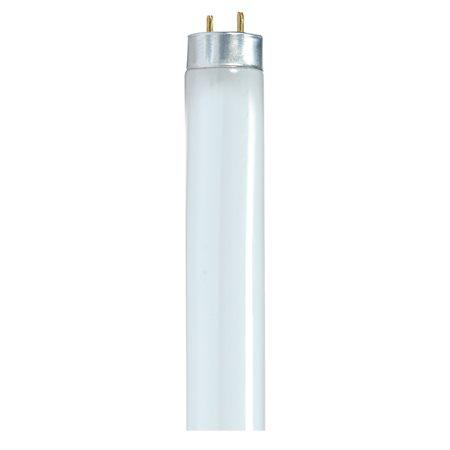 Ampoules fluorescentes